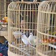 Woman thru birdcages